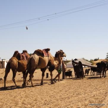 Uzbekistan: La nave del deserto