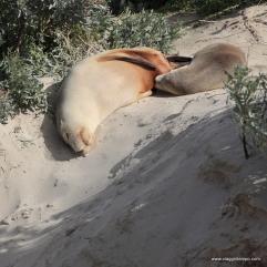 Australia, Kangaroo Island, Seal Bay Conservation Park