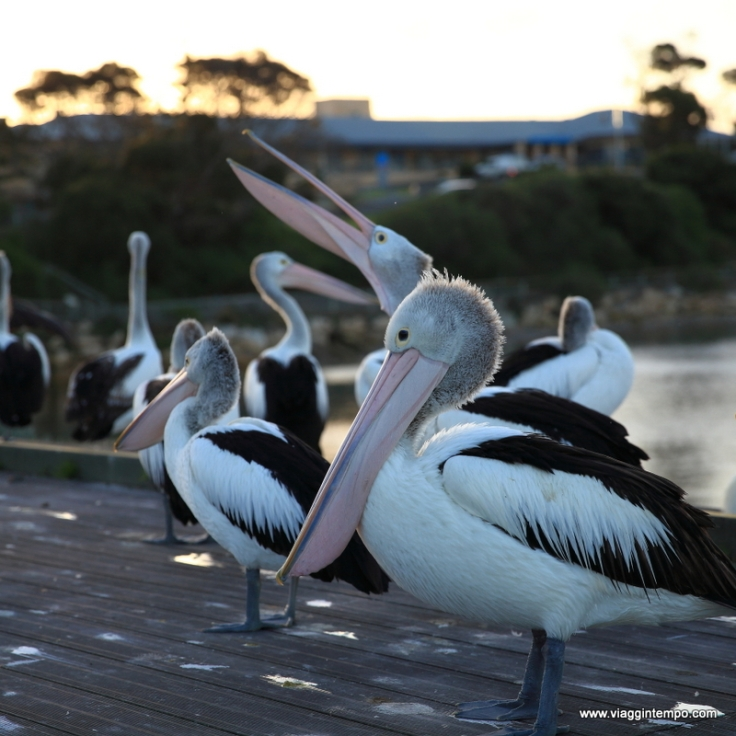 Kangaroo Island 09