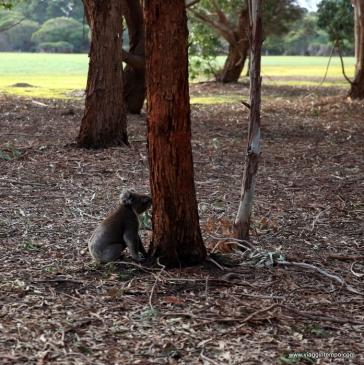 Australia, Kangaroo Island, Hansen Bay Wildlife Sanctuary
