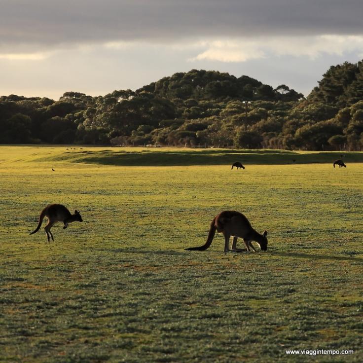 Kangaroo Island 20